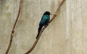 Обои обои, ветки, картинка, птица, изображение, минимализм