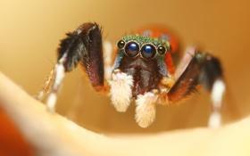 Обои фон, цвет, паук, джампер