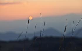 Картинка закат, стебли, небо, трава, горы, боке