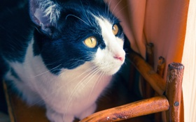 Картинка глаза, котенок, стул, kitten, eyes, chair, милый кот