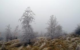 Обои иней, деревья, природа, туман