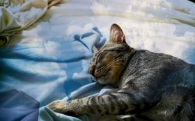 Картинка cat, отдых, Кошка