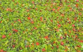 Обои осень, листья, природа, листва, текстура, Nakajima Park