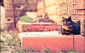 Картинка кот, cat, отдых, кирпич