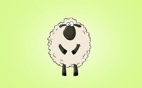 Обои животное, светлый фон, sheep, овца, изумительный взгляд
