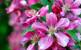 Обои макро, лепестки, цветение