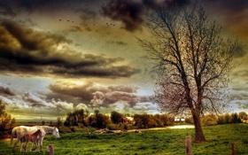 Обои поле, небо, пейзаж, тучи, природа, фото, село