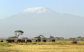Обои unforgettable safari, слоны, животные, гора