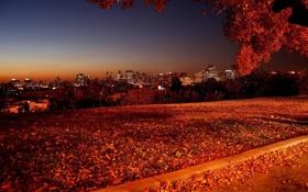 Картинка пейзаж, осень, горизонт, небо, ночь, вид, листва