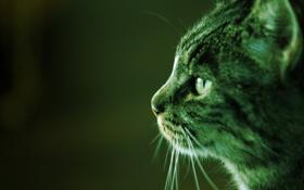 Обои кот, профиль, Фото