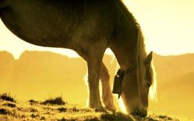 Обои природа, свет, конь