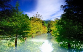 Обои вода, деревья, природа, ель, хвойные, затопление