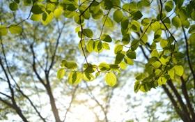 Картинка листья, солнце, ветки, дерево, зеленые, крона