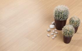 Обои пол, кактусы, камешки