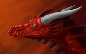 Картинка взгляд, морда, красный, фантастика, дракон, арт, рога