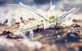 Обои трава, графика, blur, замерзшая, размытое, frozen. grass
