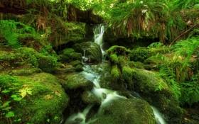 Обои лес, папоротник, мох, водопад