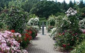 Обои деревья, цветы, Англия, розы, дорожки, сад, разноцветные
