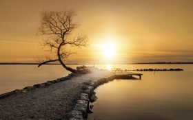 Обои море, камни, дерево, Закат, весна