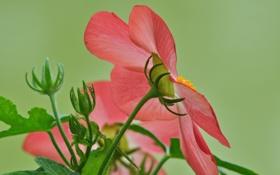 Картинка цветок, природа, растение, лепестки, стебель