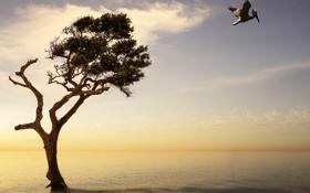 Обои pelican, surreal, montage, ocean, sunset