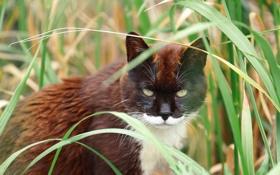 Картинка травка, глаза, котяра, кошак, кот, взгляд