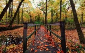 Картинка мост, природа, парк