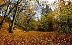 Картинка осень, листья, природа, парк
