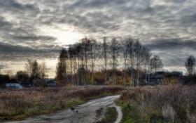 Обои дорога, деревья, собака, пастораль