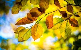 Обои осень, небо, листья, ветка