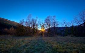 Обои солнце, лучи, деревья, полянка