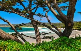Обои бухта, Калифорния, деревья, Кармель, США, море