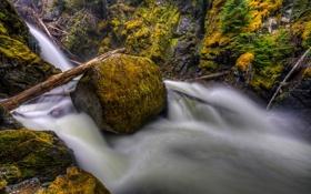 Обои лес, вода, природа, река, камень, мох, поток