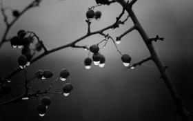 Обои капли, ветки, дождь