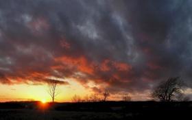 Обои поле, небо, солнце, облака, деревья, пейзаж, закат