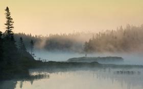 Картинка природа, лес, озеро, утро, туман