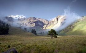 Картинка горы, долина, пейзаж, дерево