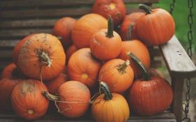 Картинка тыквы, тыква, оранжевые, много