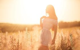 Обои поле, лето, девушка, силуэт, солнечный свет