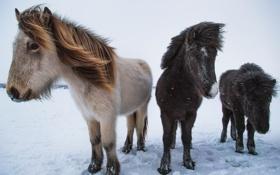 Обои пони, large, small, medium