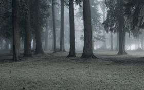 Картинка природа, туман, парк