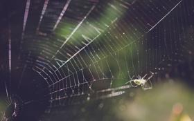 Обои лапки, паутина, паук