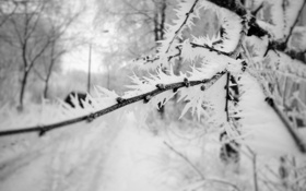 Картинка иней, макро, снег, Зимнее утро