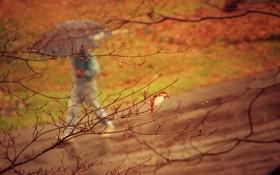 Обои дорога, осень, капли, дождь, дерево, настроение, человек