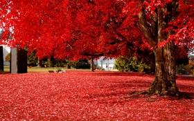 Обои осень, листья, пейзаж, дерево, красиво, красные