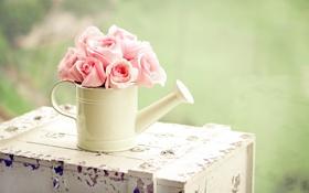 Обои зелень, цветы, розы, лейка, розовые