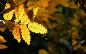 Обои осень, свет, природа, лист, желтое, на черном