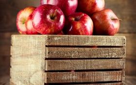 Обои красные, фрукты, яблоки, ящик