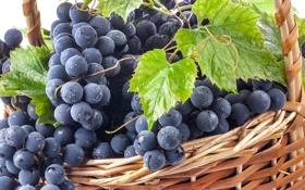 Обои листья, капли, синий, роса, ягоды, чёрный, корзина