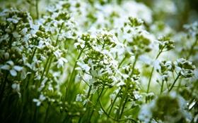 Обои цветы, природа, растения
